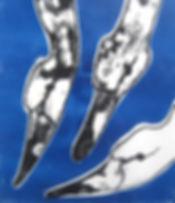 Three swans - Monoprint