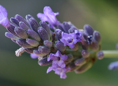 Colour : Lavender green!