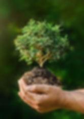 cuales_son_las_ramas_de_la_ecologia_y_qu
