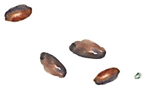 Cacao & hemp seeds