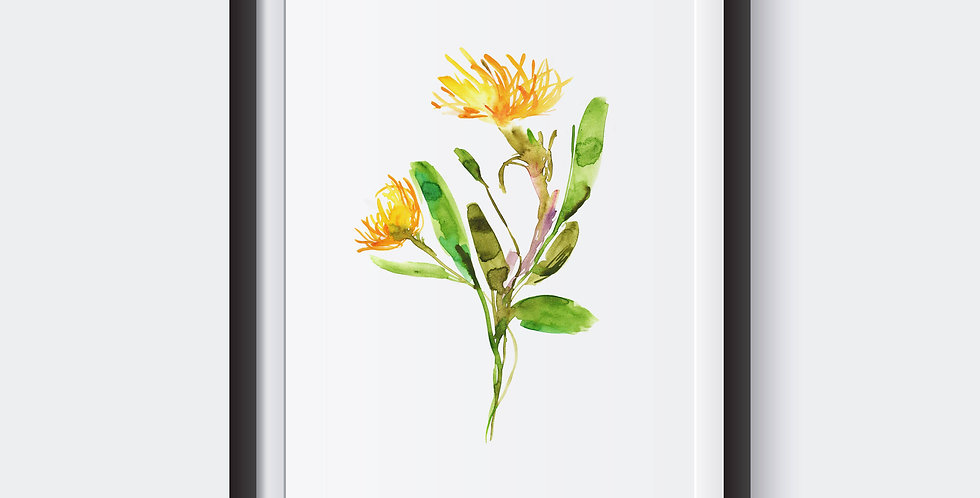Coltsfoot Spring Flower Poster