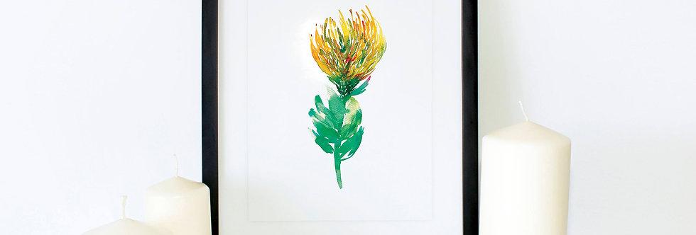 Yellow Pincushion flower
