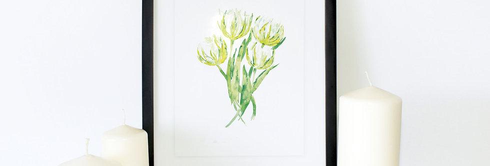 Winter Aconite Flower Poster