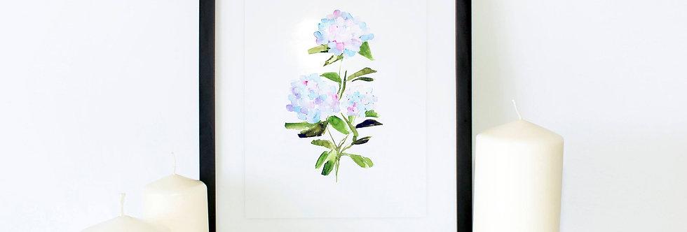 Blue Hydrangea Series 002 Poster