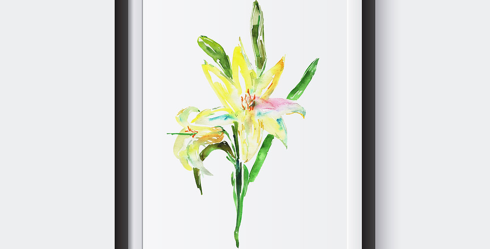 Lily american yellow Flower