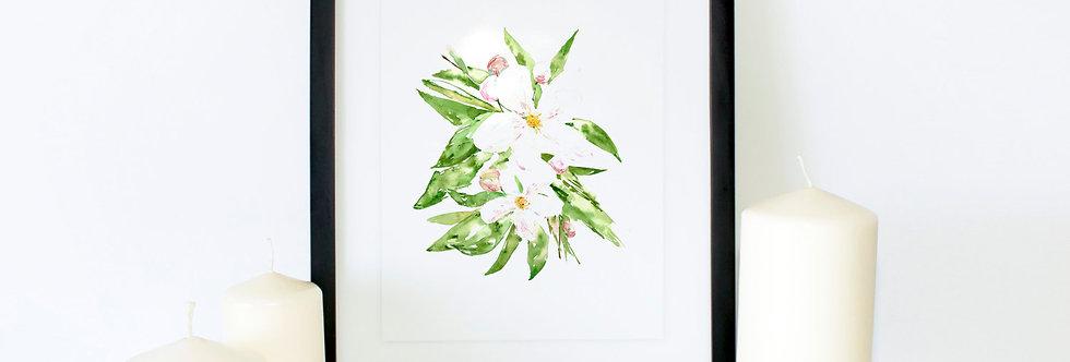 Apple Blossom Flower Poster