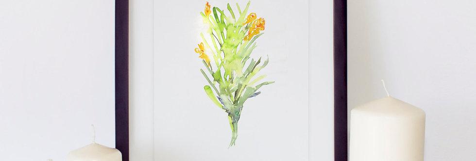 Herb Spanish Tarragon Poster