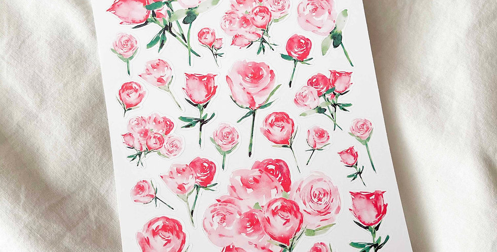 Beautiful Pink and Red Roses