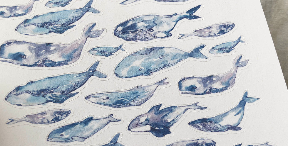 Watercolored Blue Whales Stickers