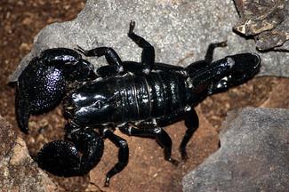 escorpion10.jpg