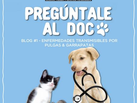 Enfermedades que pueden ser transmitidas por mosquitos y garrapatas a tus mascotas.
