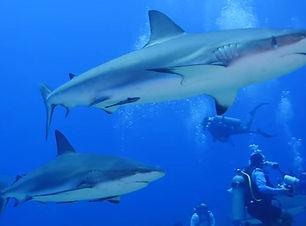 Shark dive roatan_edited.jpg