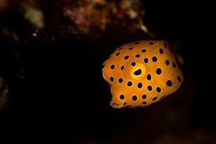Night Dive.jpg