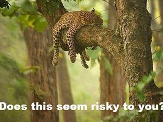 Beyond Risk #2: Mind that Perception Gap!