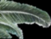 Palmwedel web1050.png