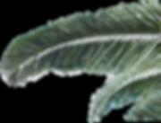 Palmwedel%20web1050_edited.png