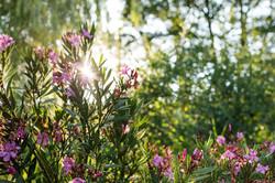 English Garden Lifestyle1