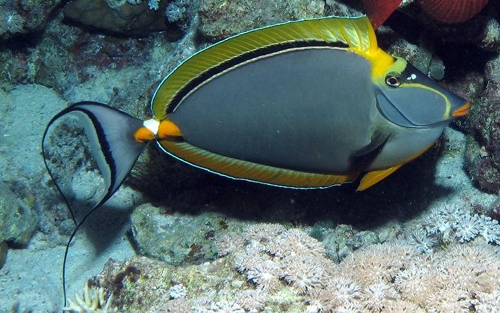 Shark Fin Reef Similan Islands Liveaboards Phuket