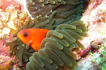 Discover Scuba Diver Thailand