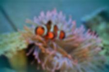 Discover Scuba Diving Course - Liveabaords Phuket