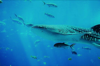 Nitrox Diver Course Thailand