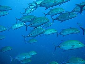 The Best Dive Sites - Thailand Koh Bon - The Pinnacles