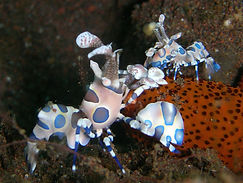 Hin Deang Best Dive sites in Thailand Hin Deang
