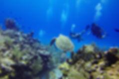 Discover Scuba Diving - Liveaboards Phuket Thailand