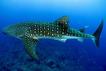 Open Water Diver Course - Liveaboards Phuket