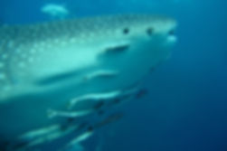 Master Scuba Diver Course - Liveaboards Phuket