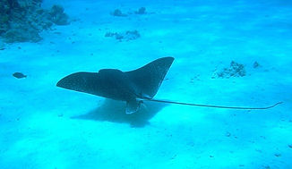 Thailand Scuba Diving Courses,Thailand Scuba Dive Sites,Best Thailand Dive Sites,Phuket Scuba Diving Trips,Thailand Liveaboards Phuket,Padi Open Water Diver Thailand,Learn To Dive In Thailand,Diving Information Thailand,Phi Phi Island Diving