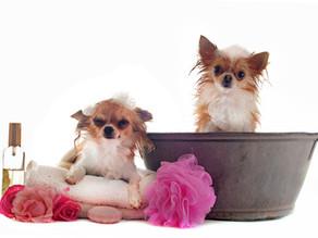 ¿Problemas a la hora del baño de tu perro?