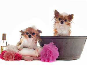 Things to keep in mind when giving bath to your pet