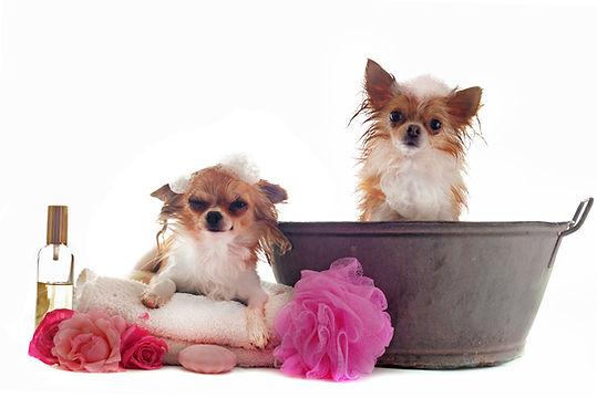 Mobile Dog Grooming Spring Hill TN, Mobile Dog grooming Thompsons Station TN, Mobile Dog grooming Franklin TN