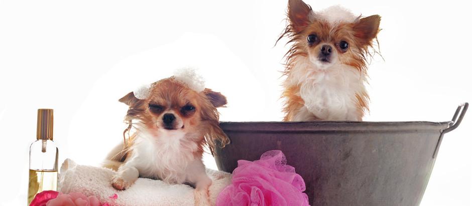 Higiene de las mascotas... mi perro huele a perro ¿con qué frecuencia lo puedo lavar?