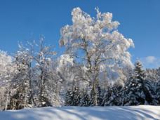 winter_30.jpg