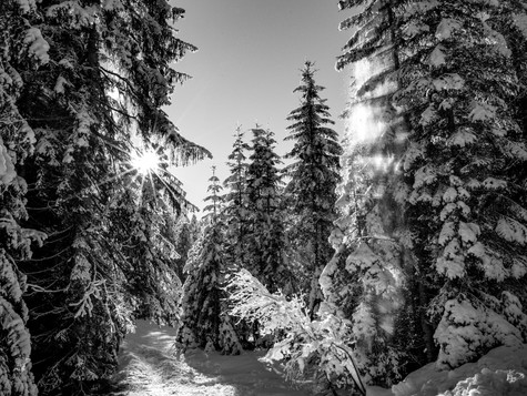 bn_winter_38.jpg