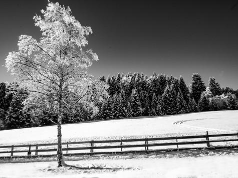 bn_winter_35.jpg