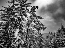 bn_winter_29.jpg