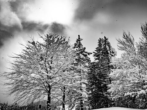 bn_winter_31.jpg