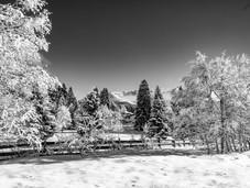 bn_winter_36.jpg