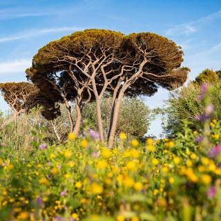 tuscany11.jpg