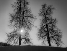 bn_winter_32.jpg