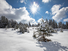 winter_11.jpg