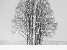 bn_winter_11.jpg