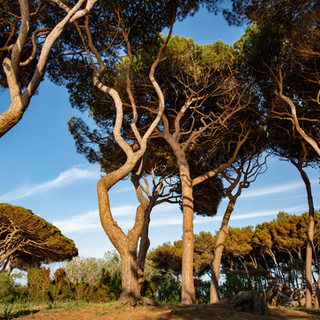tuscany5.jpg