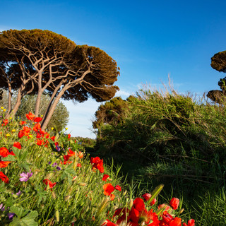 tuscany6.jpg