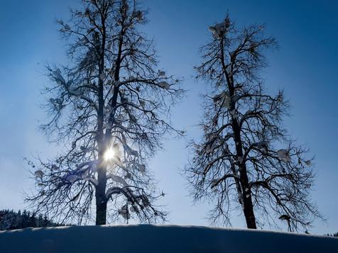 winter_32.jpg