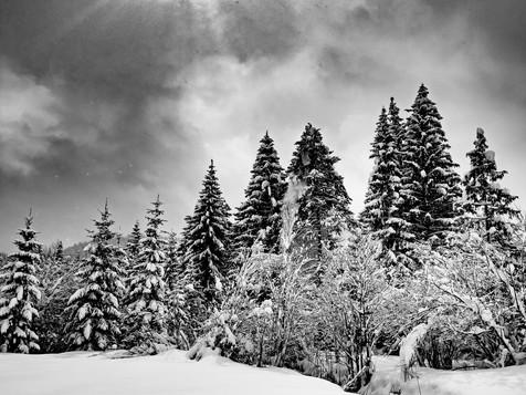 bn_winter_28.jpg