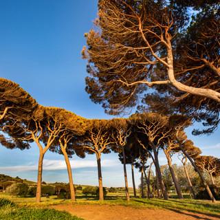 tuscany8.jpg